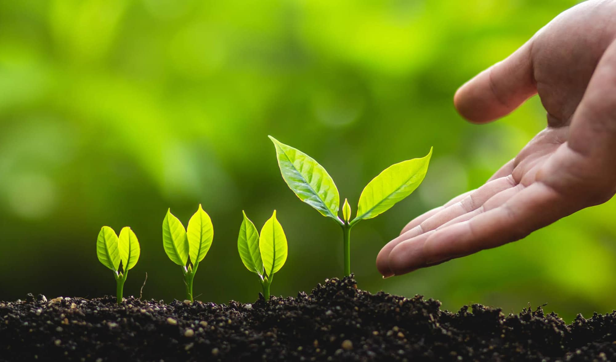 Growing plants with helping hand representing personal growth helped by counsellor-psychotherapist
